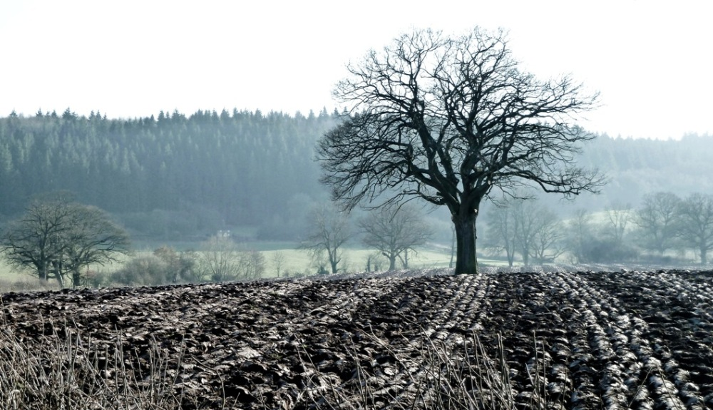 12.tree and furrows texture COPY