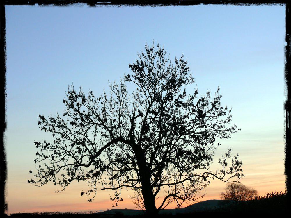 tree series (1)