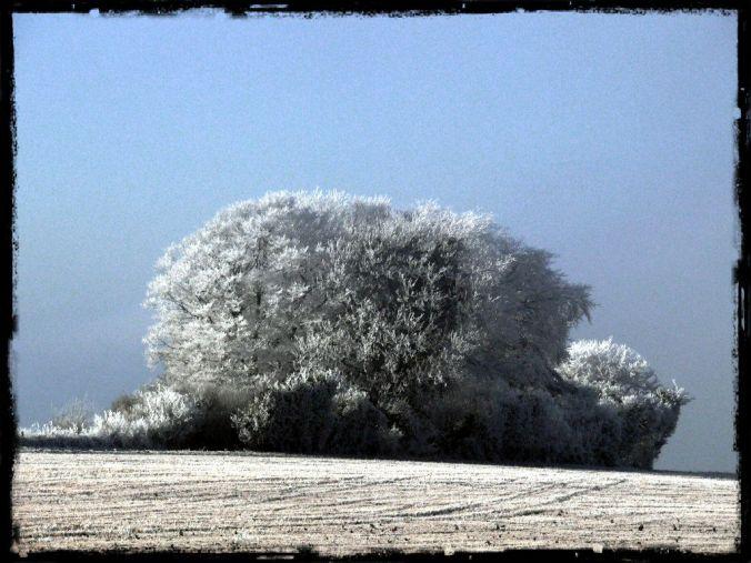 tree series (2)