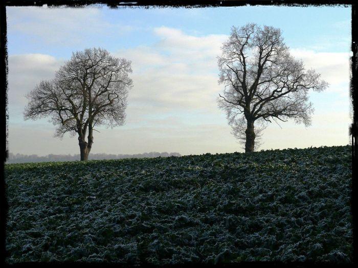 tree series (3)