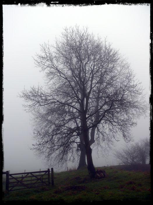 tree series (4)