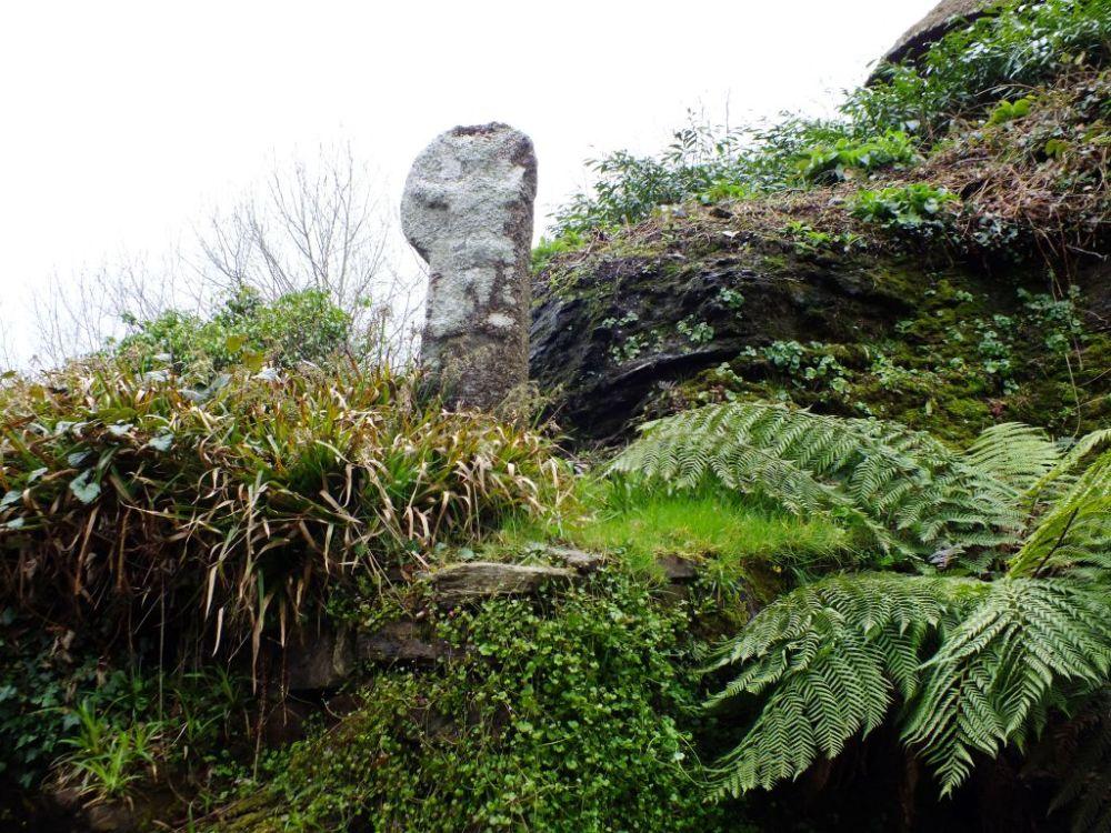 Cornish Cross
