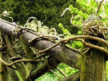 Winding wisteria