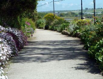 Daisy-lined path