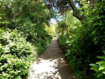 Shady woodland path