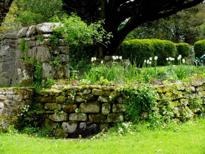 Dry stone walls covered in moss and primroses