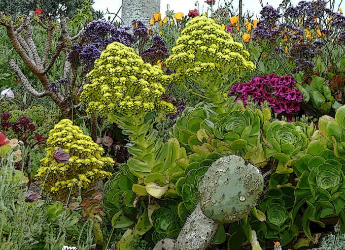 Sempervivum flowering