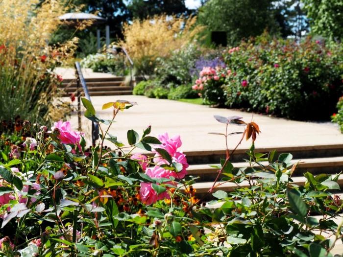 Bowes-Lyon Rose Garden
