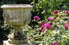 Urn and roses