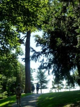 Tall trees in the Fir Walk