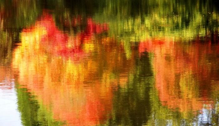 Garden Portrait: AutumnSizzle