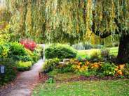 Weeping Willow over the pond