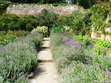 Lavender-edged path