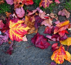 Red, orange and yellow and purple fall to the ground
