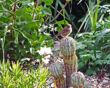 Bird in the Glasshouse