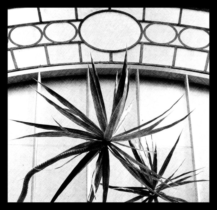 garden photography: monochrome