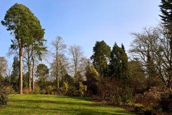 Woodland Garden view