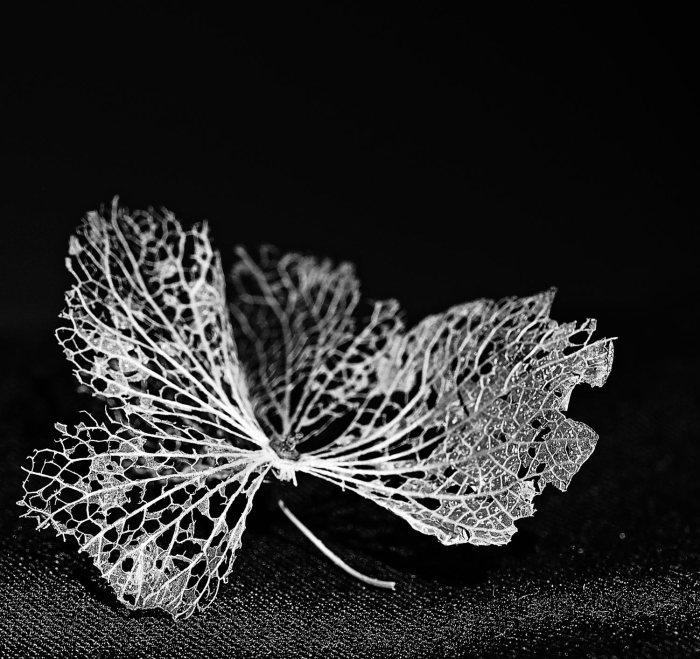 delicate-1