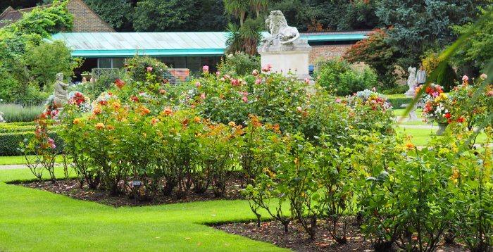 garden photography: a rosegarden