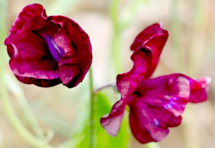 garden photography: sosweet