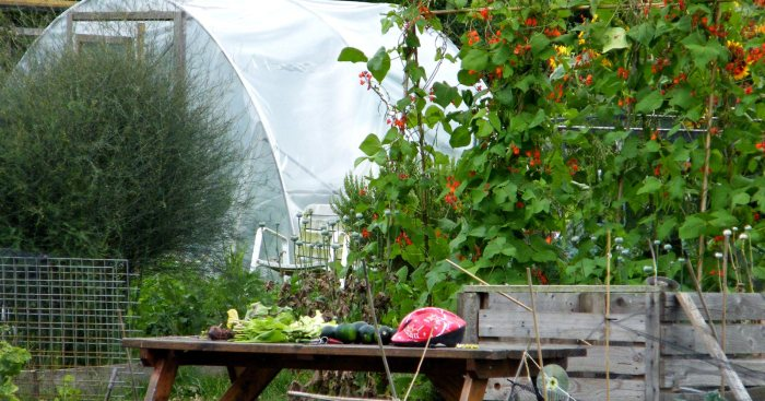 garden photography: ode to an allotment