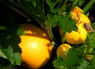 veg (1)