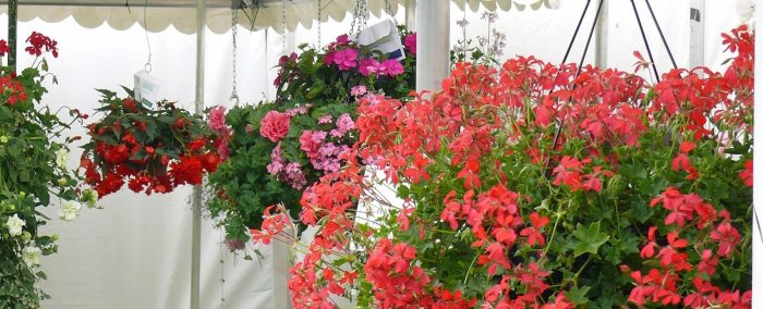 garden photography: Shrewsbury flowershow