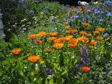 Marigolds and Borage