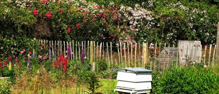 garden photography: wildlifegarden