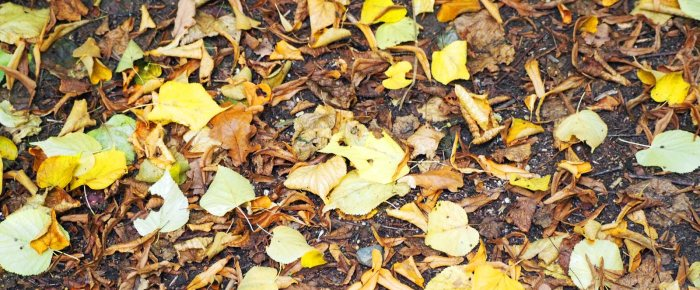 Festival of Leaves: on the ground