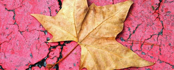 Festival of Leaves: in the pink