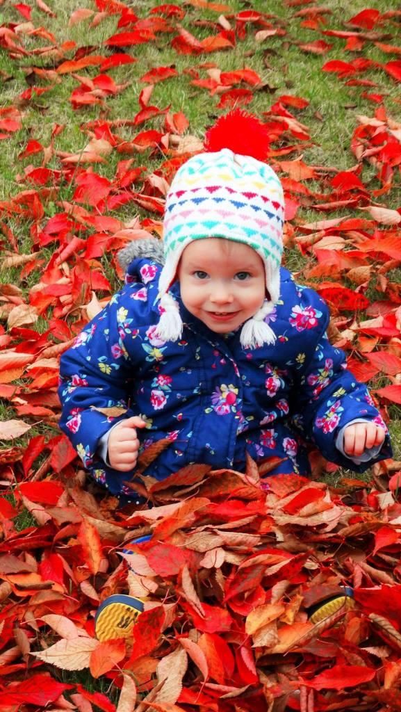 leaves-2
