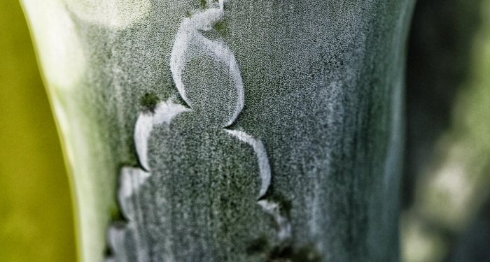 It IS easy beinggreen…