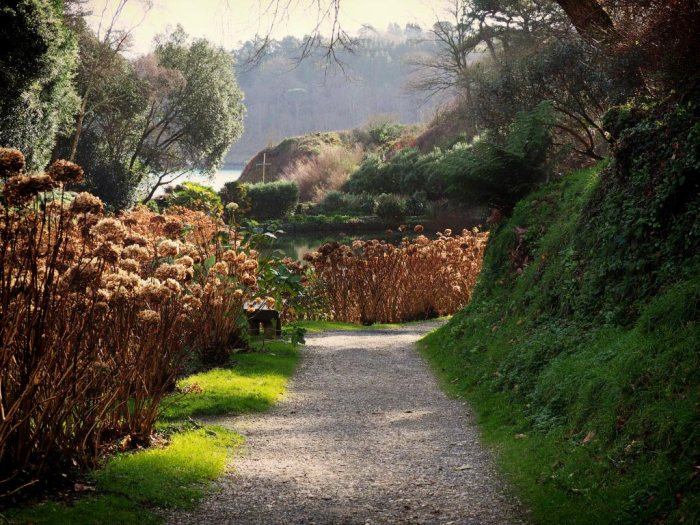 Davidia Walk