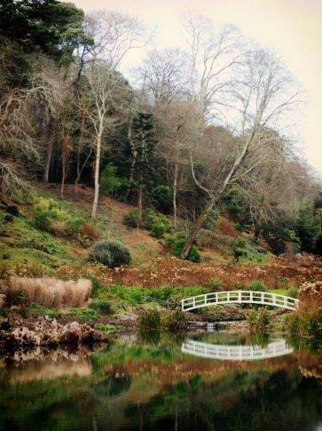 Hydrangea Valley