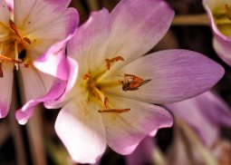 insects-(3)
