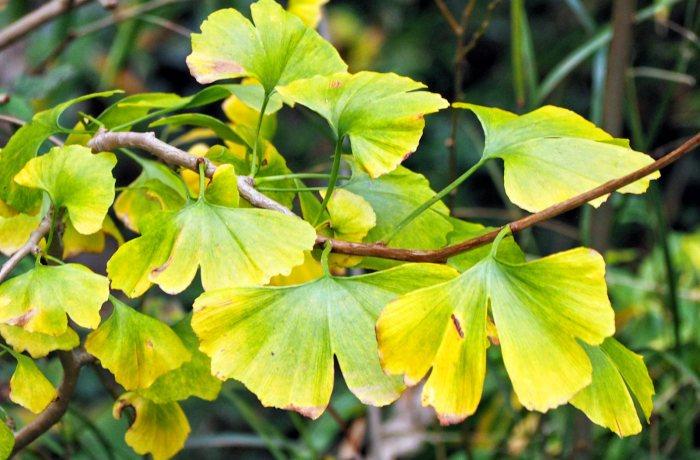 Festival of Leaves ~ week12