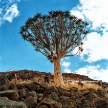 Kokerboom or the quiver tree