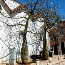 White Floss-Silk Trees